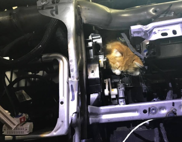 Albany Auto Tech Rescues Cat4