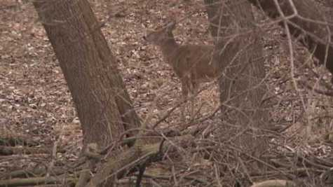 Northeast WI Counties Among Top 10 for Deer Crashes
