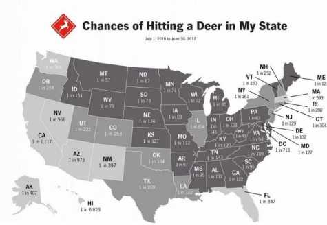Auto Body Shops See Above-Average Deer Collisions in MO